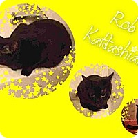 Adopt A Pet :: Rob Katdashian - Washington, DC