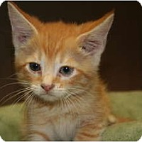 Adopt A Pet :: DIEGO - SILVER SPRING, MD