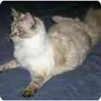 Adopt A Pet :: Gusson - Davis, CA