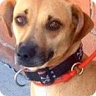 Adopt A Pet :: ELOISE (video)