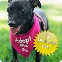 Adopt A Pet :: Allie - Santa Monica, CA