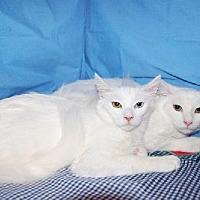 Adopt A Pet :: Crystal - Fullerton, CA