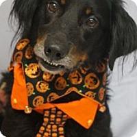 Adopt A Pet :: PARKER - Pine Grove, PA