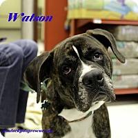 Adopt A Pet :: Watson - Alpharetta, GA