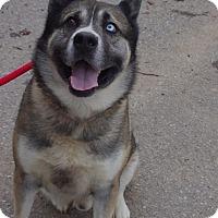 Adopt A Pet :: Yogi - Baltimore, MD