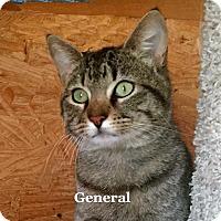 Adopt A Pet :: General - Bentonville, AR