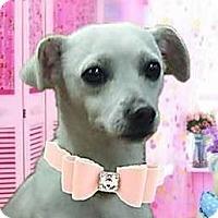Adopt A Pet :: JoJo - Modesto, CA