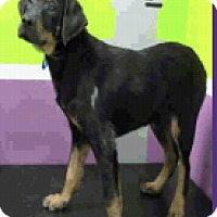 Adopt A Pet :: Otto - Fort Collins, CO