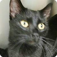 Adopt A Pet :: Savannah - West Memphis, AR
