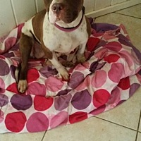 Adopt A Pet :: Kharma - Crestview, FL