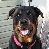 Adopt A Pet :: Jada - Joliet, IL