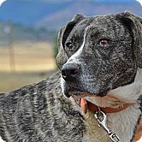 Adopt A Pet :: Tess - Yreka, CA