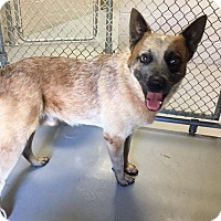 Adopt A Pet :: Hunter - Friendswood, TX