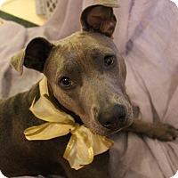 Adopt A Pet :: Anabelle (Annie) - Ocala, FL