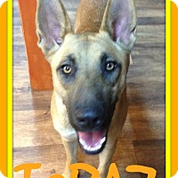 German Shepherd Dog Mix Dog for adoption in White River Junction, Vermont - TOPAZ
