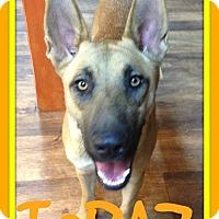 Adopt A Pet :: TOPAZ - White River Junction, VT