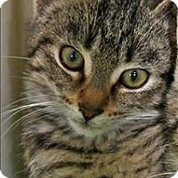 Adopt A Pet :: Mazie - Duluth, MN