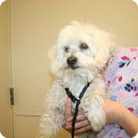 Adopt A Pet :: Rufio - Wildomar, CA