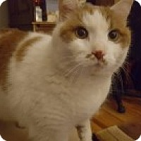 Adopt A Pet :: Lacy - McHenry, IL