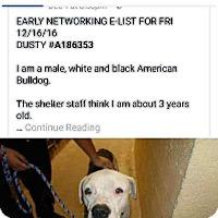 Adopt A Pet :: Frost - Mesa, AZ