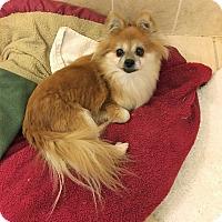 Adopt A Pet :: Darla - Tavares, FL