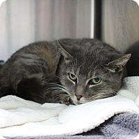 Adopt A Pet :: Nina - Warwick, RI