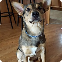 Adopt A Pet :: Dude (pending) - Northumberland, ON