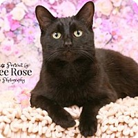 Adopt A Pet :: Hecate - Sterling Heights, MI