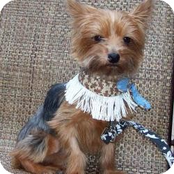 Dog Adoption The Villages Florida