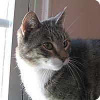 Adopt A Pet :: Pollyianna - Plattekill, NY