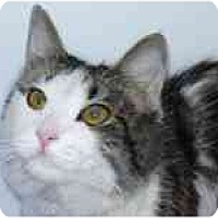 Adopt A Pet :: Sasha - Arlington, VA