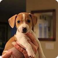 Adopt A Pet :: Baby Keeley - Marlton, NJ