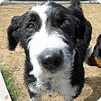 Adopt A Pet :: Raine - Glenrock, WY