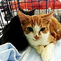 Adopt A Pet :: Alex - Atlanta, GA