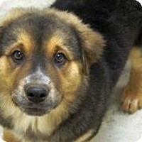 Adopt A Pet :: Moe-Bear - Austin, TX