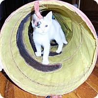 Adopt A Pet :: Veronica - Xenia, OH