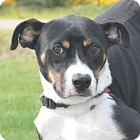 Adopt A Pet :: Sammy - Tumwater, WA