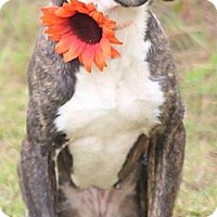 Adopt A Pet :: Mia - Orangeburg, SC