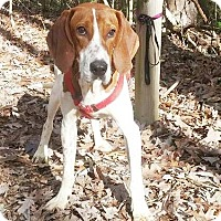 Adopt A Pet :: Cletus $40 - Lincolnton, NC