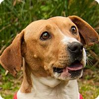 Adopt A Pet :: ALYCE - Farmington Hills, MI