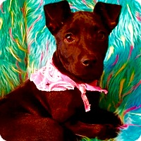 Adopt A Pet :: Bella in CT - Manchester, CT