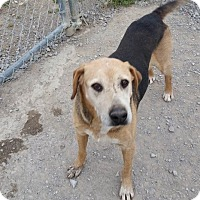 Adopt A Pet :: Leo - Lewisburg, TN