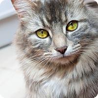 Adopt A Pet :: Payton - Ann Arbor, MI