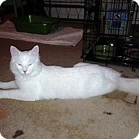 Adopt A Pet :: Nimbus - Colmar, PA