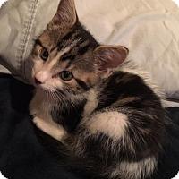 Adopt A Pet :: Spencer - Hernando, MS