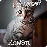 Adopt A Pet :: Rowan - Jacksonville, FL