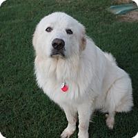 Adopt A Pet :: Tundra - Tulsa, OK