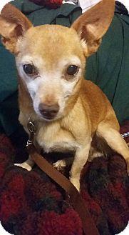 Chihuahua Mix Dog for adoption in Toledo, Ohio - Bosco
