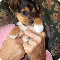 Adopt A Pet :: Chickadee - Girard, GA