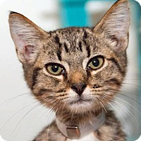 Adopt A Pet :: Neptune - Prescott, AZ